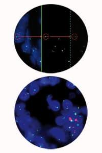 digital slide particolare d sight fluo